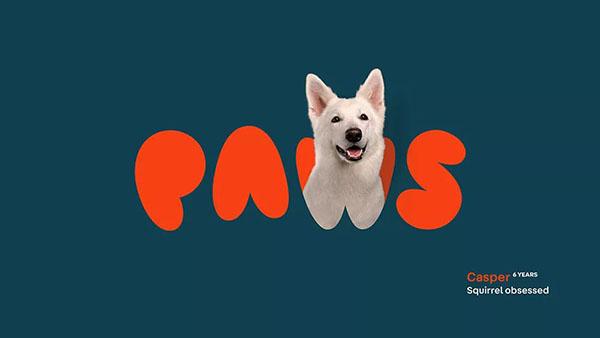 狗粮品牌Paws视觉VI设计