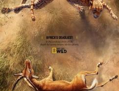致命战役:动物纪录片海报设计