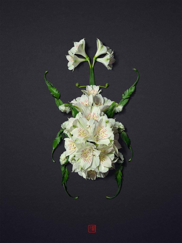 日本艺术家RakuInoue用花瓣、植物构造一个动物世界