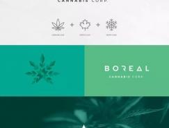Boreal茶叶包装设计
