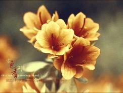 PS调色教程:使用滤镜调出古韵金色花朵