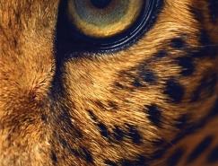 获得灵感是我们使用它们的唯一目的:Lavera眼线