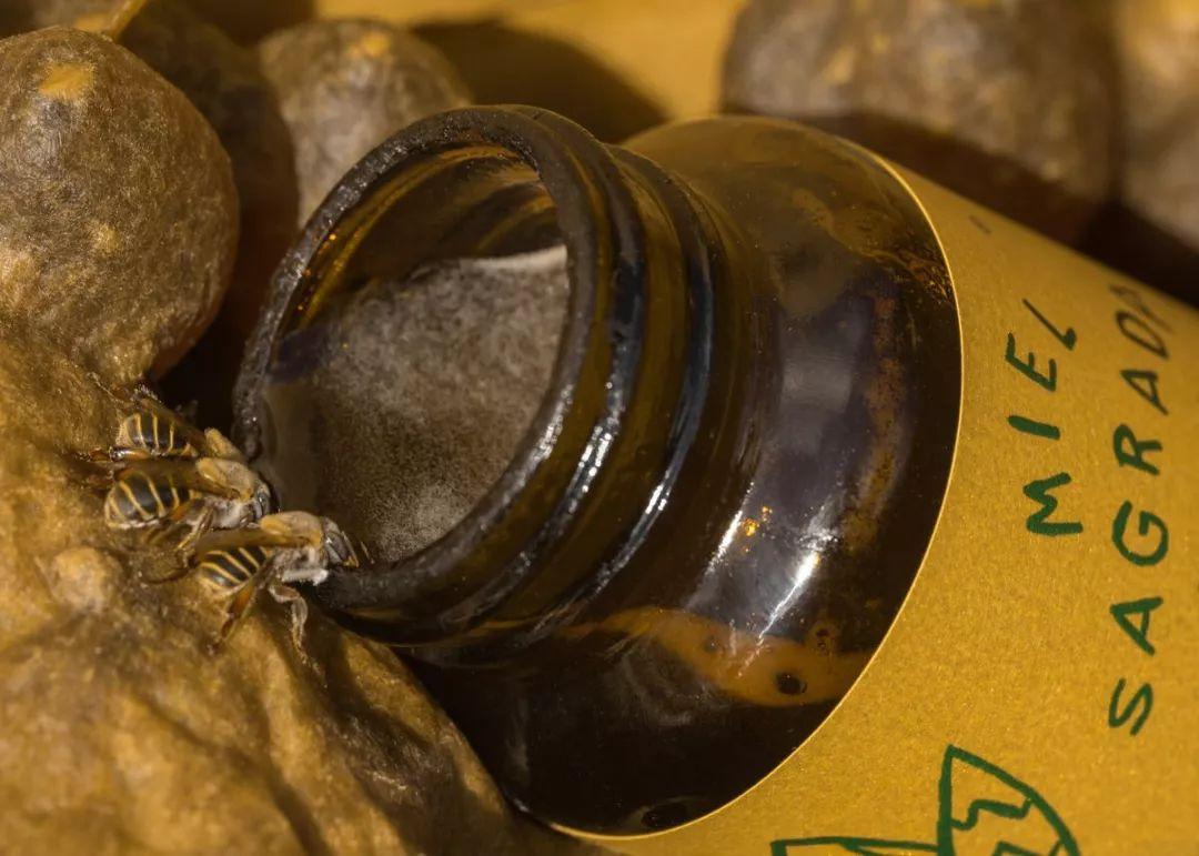 蜂蜜品牌MIEL SAGRADA MAYA视觉形象设计