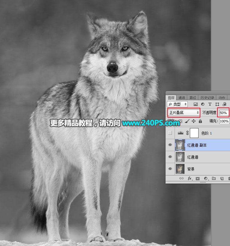 PS抠图教程:抠取毛茸茸的雪中灰狼