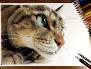 Yuki Kudo逼真的超写实猫咪绘画作品
