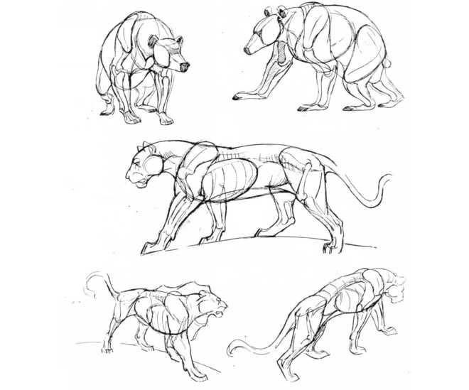 激发您的灵感 如何绘制动物素描画
