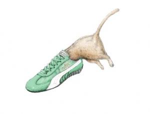 运动鞋的魔力,动物通通钻进来!