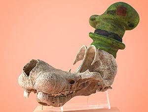 博物馆惊现卡通角色头骨!竟是海绵宝宝,大力水手......