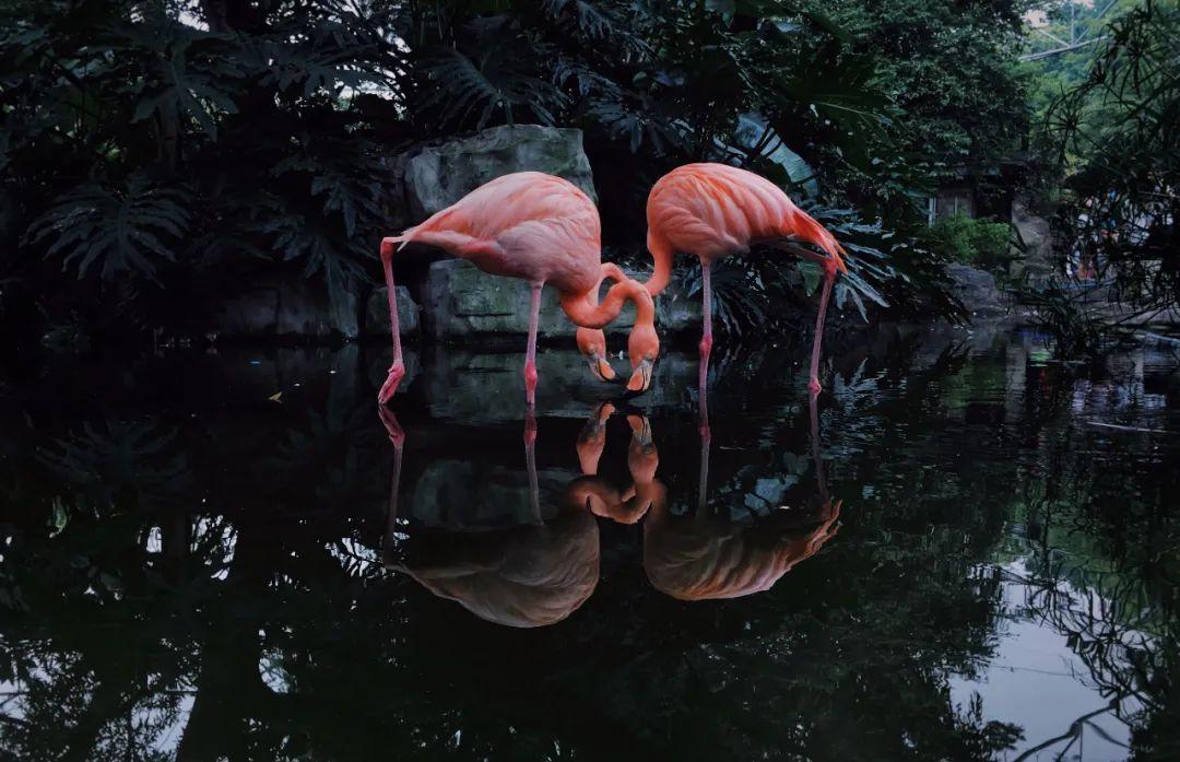 视觉盛宴!2020年iPhone摄影大赛获奖作品欣赏