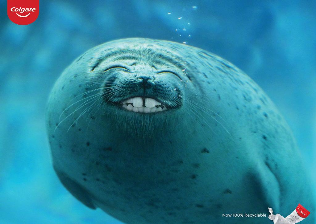 动物的微笑!colgate(高露洁)牙膏创意广告