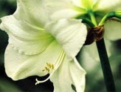 花卉摄影如何进行意境创造