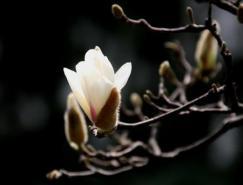 花卉拍摄技巧