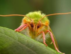 國外優秀昆蟲攝影欣賞
