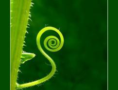 一组植物摄影欣赏