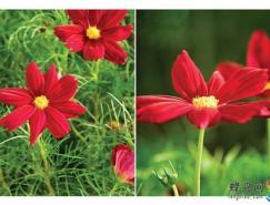 专业花卉摄影技巧