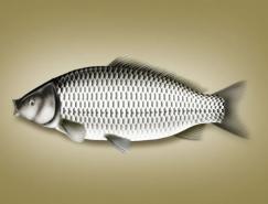 Photoshop鼠绘实例:鲤鱼