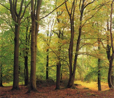 秋天风景的拍摄技巧(2)
