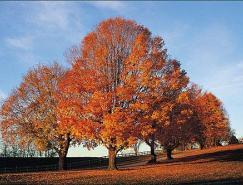 抠图技巧:用PS通道给繁密的树枝抠背景