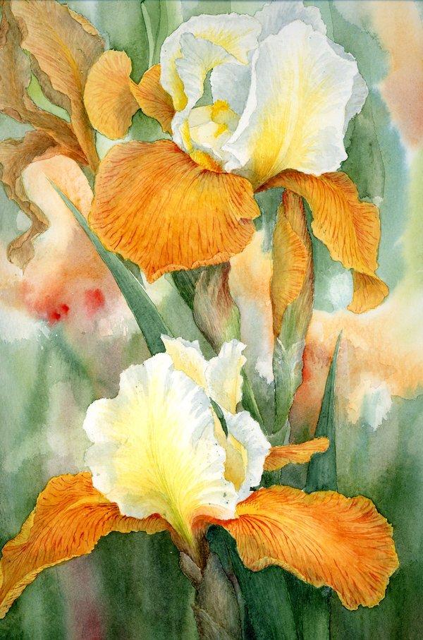louise花卉插画作品欣赏