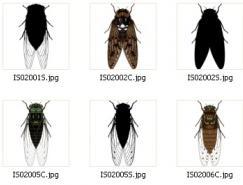 昆虫系列:矢量蜜蜂下载