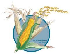 玉米矢量图素材