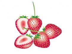 水果系列:草莓矢量素材
