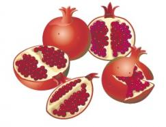 水果系列:石榴矢量素材
