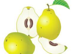 水果系列:梨子矢量素材
