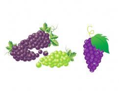 水果系列:葡萄矢量素材