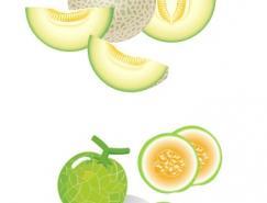 水果系列:哈密瓜矢量素材