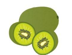 水果系列:猕猴桃矢量素材