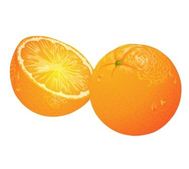 水果系列:桔子橙子矢量素材