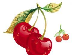 水果系列:樱桃矢量素材