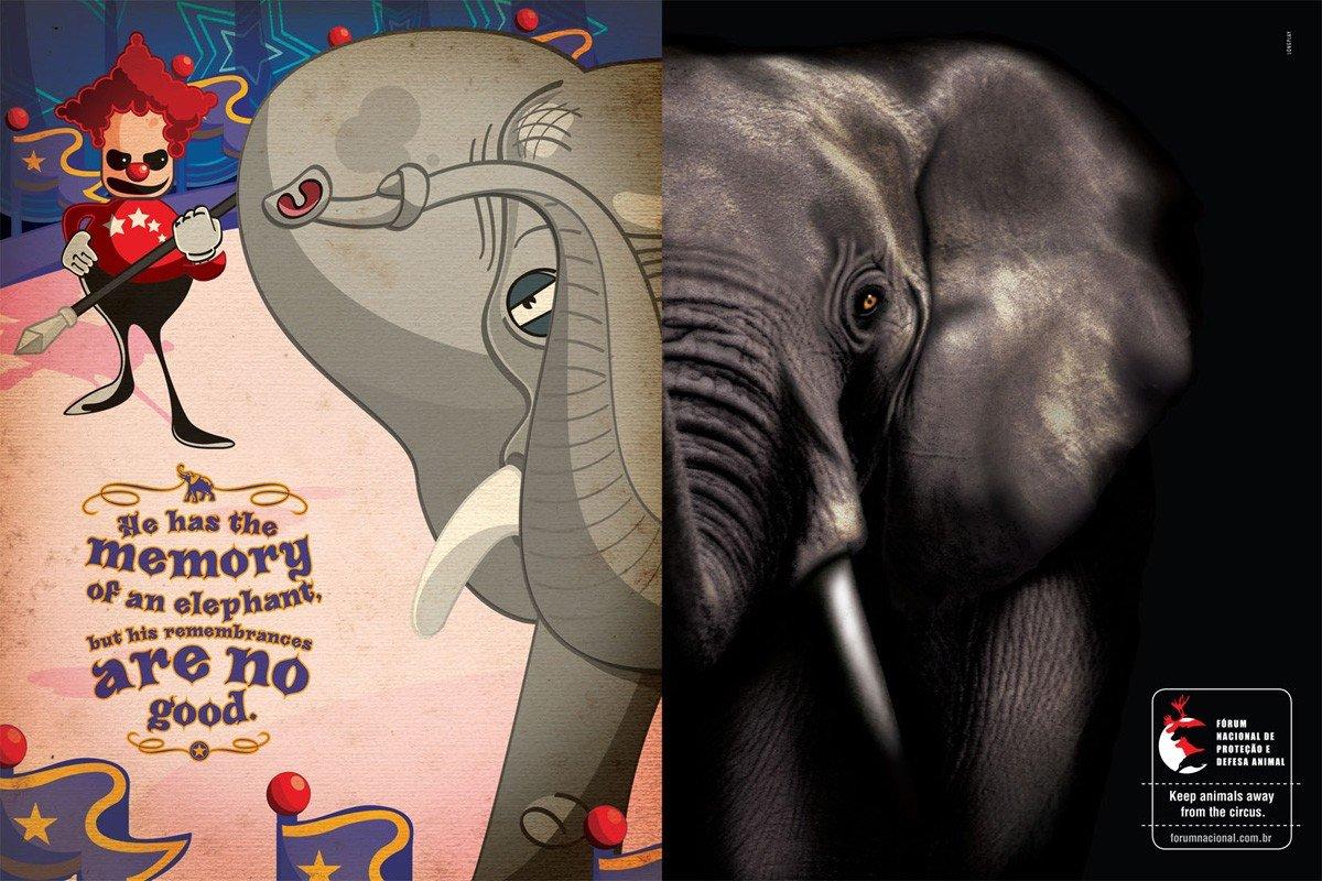 保护动物组织公益广告