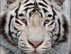teamS动物摄影欣赏
