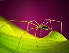 CYRUS昆虫微距摄影作品之一