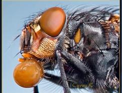 CYRUS昆虫微距摄影作品之二