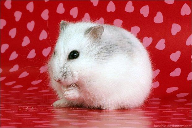 pietern可爱的猫和老鼠摄影作品欣赏