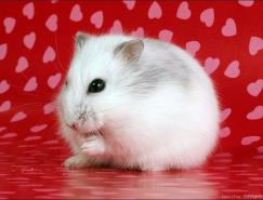 Pietern可爱的猫和老鼠摄影作品