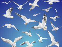 飞翔的海鸥和鸽子矢量素材