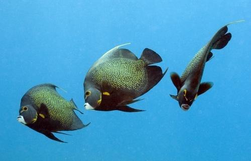 海底世界摄影佳作欣赏 - 设计之家