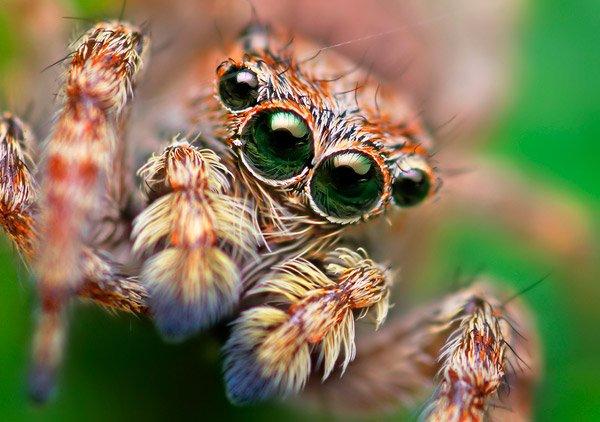 动物眼睛超微距特写摄影欣赏(2)