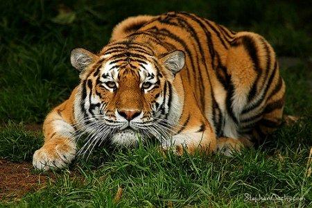 30张漂亮的动物摄影作品欣赏(2)