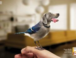 WitteMolen宠物粮食创意广告