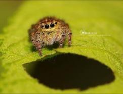 Herro的昆虫微距摄影实例