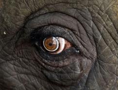 卫报精选:野生动物摄影澳门金沙网址