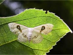 经验谈:昆虫微距摄影技巧