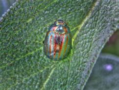 色彩缤纷的昆虫摄影图片欣赏
