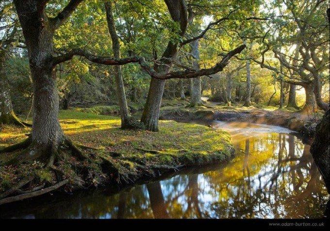 12张绝美的秋天树林摄影欣赏