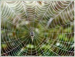 发现微妙世界:蜘蛛网怎么拍